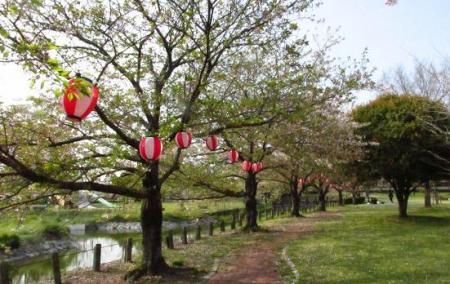 牡丹と桜公園 059