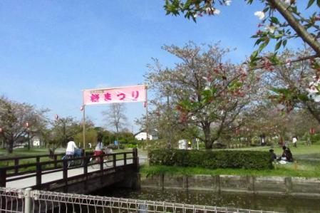牡丹と桜公園 069