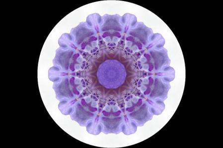 筑紫猩々袴 013