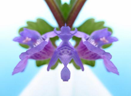筑紫猩々袴 018