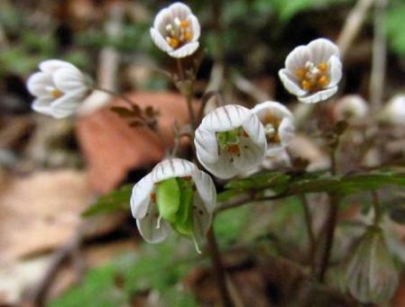 カラ迫岳の花 017