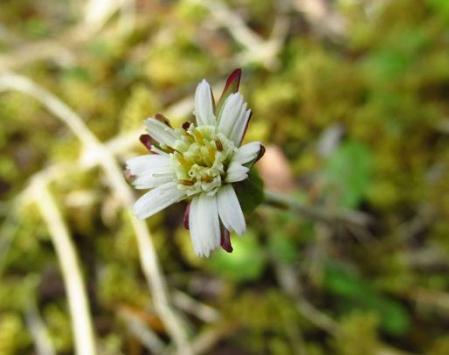 カラ迫岳の花 107