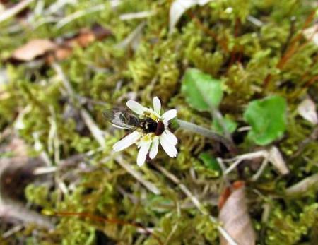 カラ迫岳の花 099