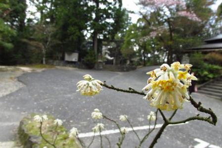 カラ迫岳 305