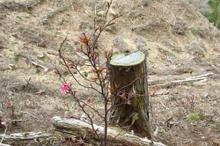 カラ迫岳 190