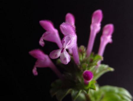小さな花と昆虫 012