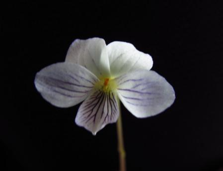 小さな花と昆虫 010