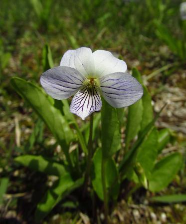 小さな花と昆虫 007