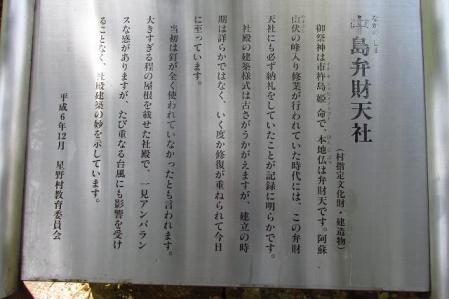 采配桜 237