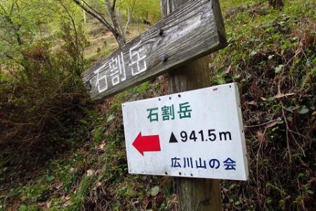 采配桜 287