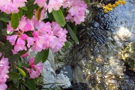 石楠花 061