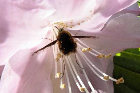 石楠花 117
