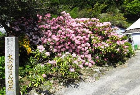 石楠花 123