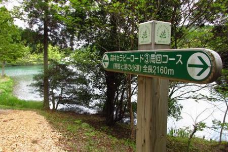 中山黒木藤ハイノキ 142