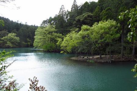 中山黒木藤ハイノキ 237