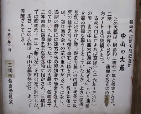 中山黒木藤ハイノキ 044