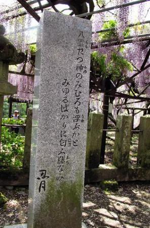 中山黒木藤ハイノキ 082