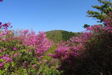 井原山 237