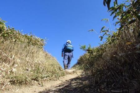 井原山 265