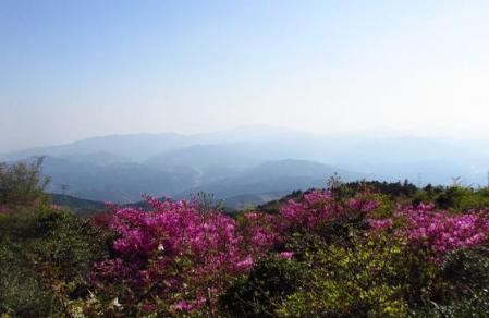 井原山 279