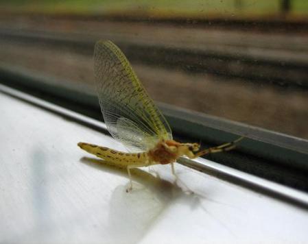 電車と昆虫 016