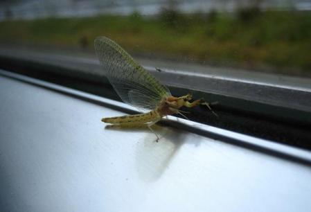 電車と昆虫 010