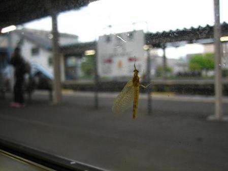電車と昆虫 049