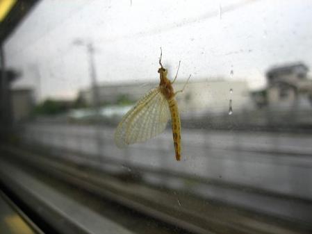 電車と昆虫 043