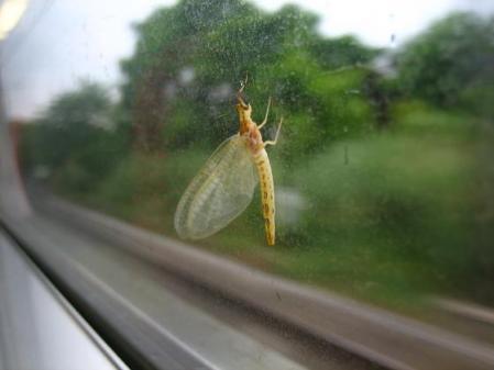 電車と昆虫 045