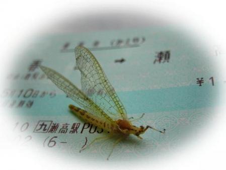 電車と昆虫 042
