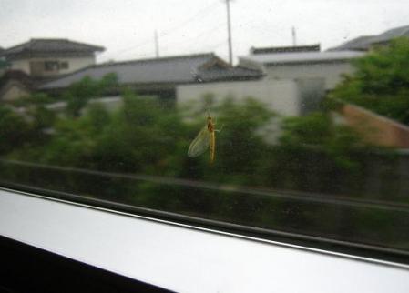 電車と昆虫 052