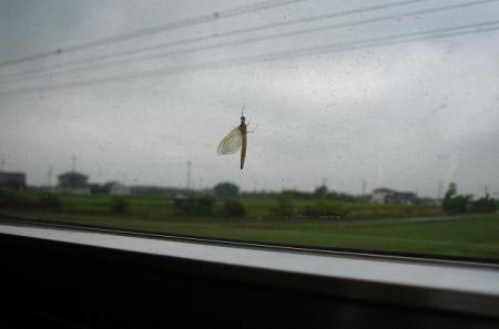 電車と昆虫 055