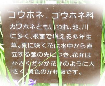 甲の公園 057