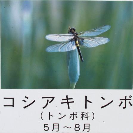 甲の公園 011