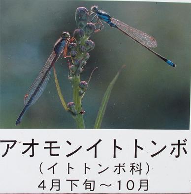 甲の公園 009