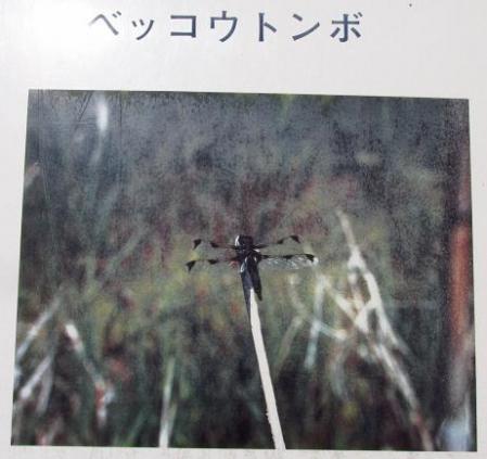 甲の公園 017