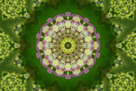 足湯と紫陽花 046