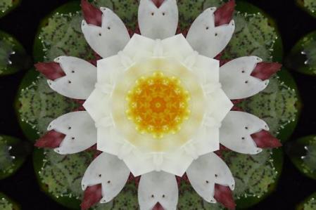足湯と紫陽花 016
