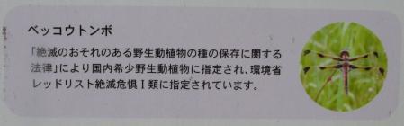 ヒバリとトンボi 011