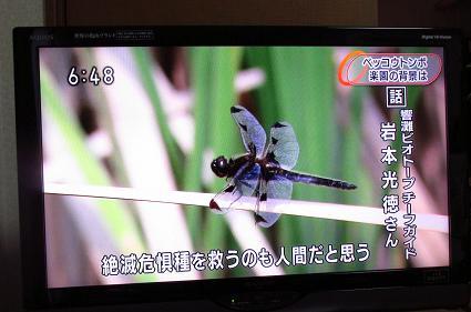 ヒバリとトンボi 127