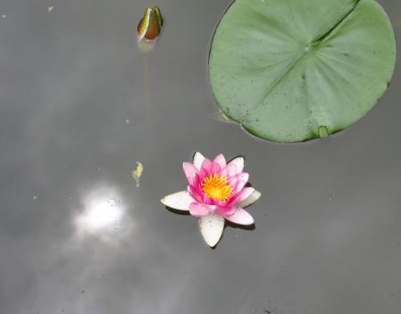 麻生池トンボ 059