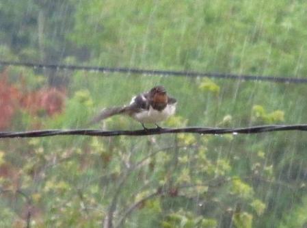 雨と鳥 004