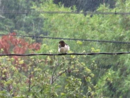 雨と鳥 002