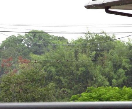 雨と鳥 007