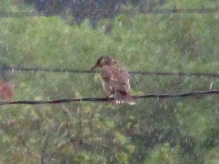 雨と鳥 013