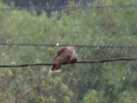雨と鳥 011