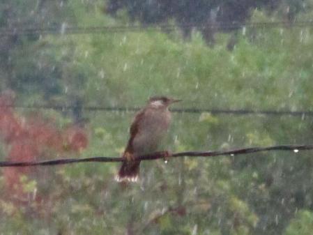 雨と鳥 009