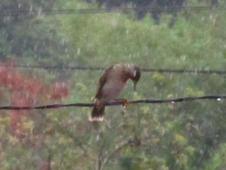 雨と鳥 010