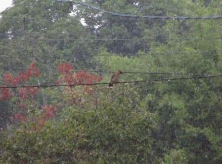 雨と鳥 008