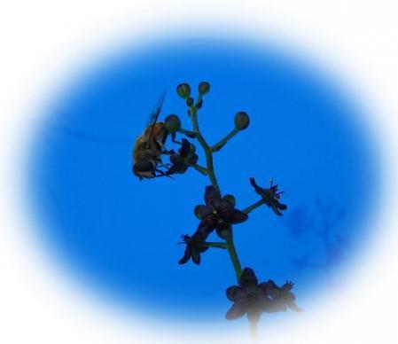 天山の花 017